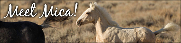 Save Wild Horses - Mica Blog
