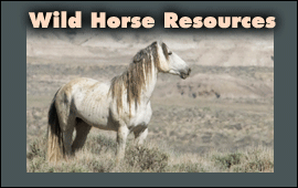Wild Hoofbeats Resources