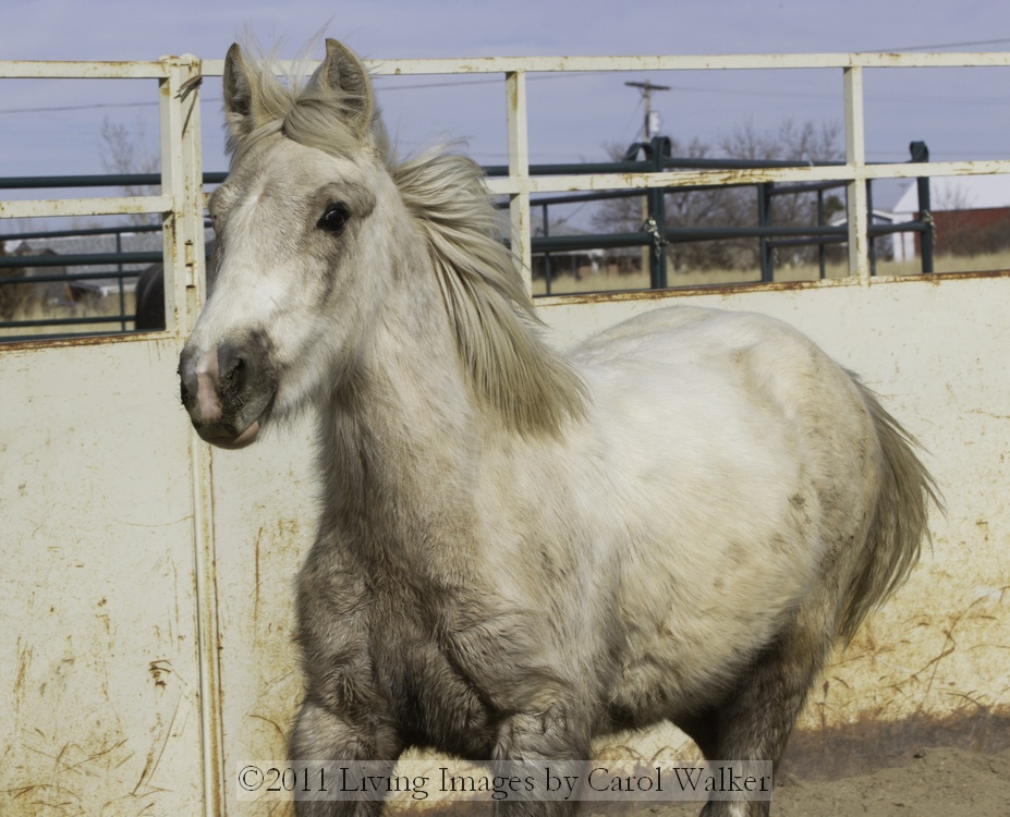 Wild Horses � Mica and I touch for the first time | Wild Hoofbeats