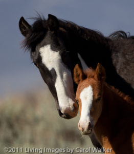 Beautiful mare and foal