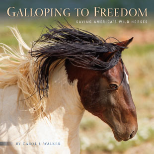 Galloping to Freedom Book Cover