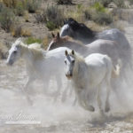 Wild Horses: The Fight to Save Wyoming's Wild Horses is On