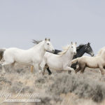 Last Chance to Comment on BLM's Destruction of Wyoming's Wild Horse Herds