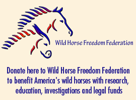 Donate to Wild Horse Freedom Federation
