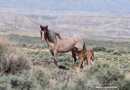 Adobe Town Mare with Newborn Foal