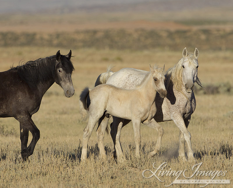 Wild Horse Family in Adobe Town