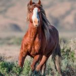 Wild Horses: Federal Court Dismisses State of Wyoming's Anti-Mustang Lawsuit