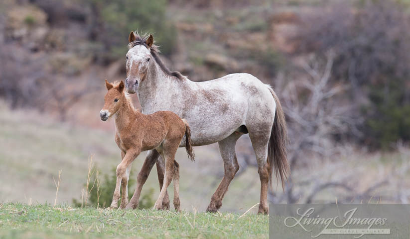 Aurora and her filly