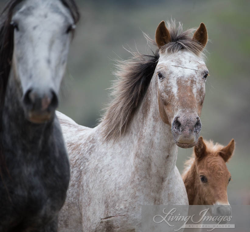 Storm, Aurora and her filly