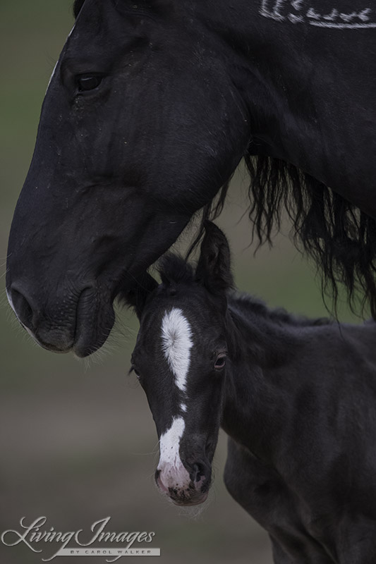 Diamond Girl and her filly