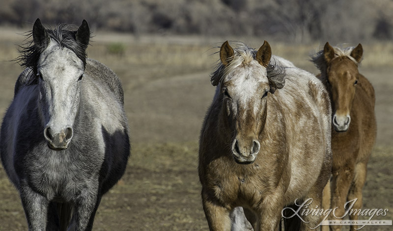 Storn, Sundance and Aurora's filly