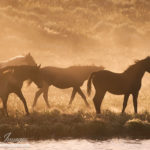 Wild Horses are a National Treasure – An Evening with Carol Walker May 12 at Longmont Public Library