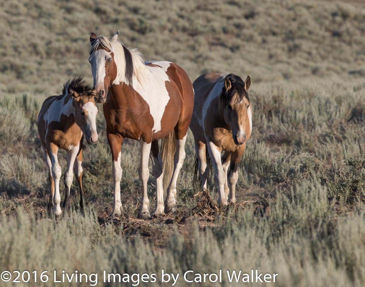 Beautiful family in South Steens