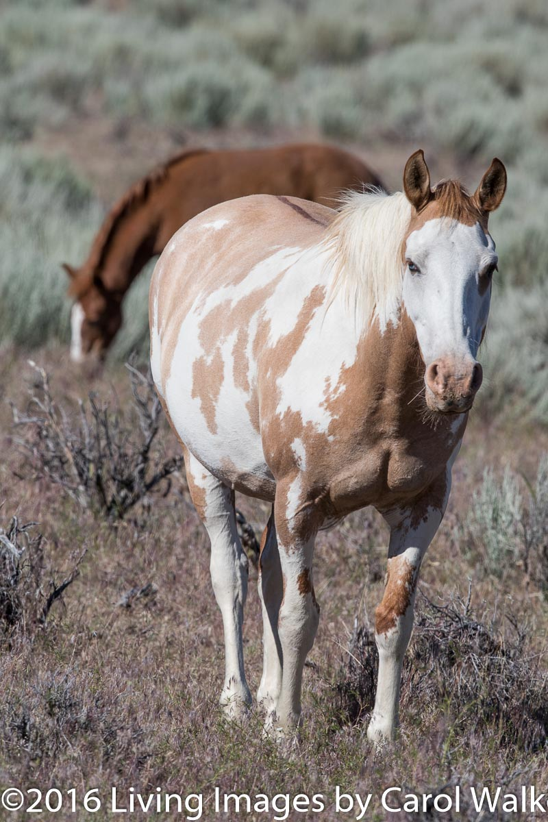 Mare and foal in South Steens