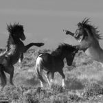 Two Wild Horse Appeals Argued at the 10th Circuit Court in Denver