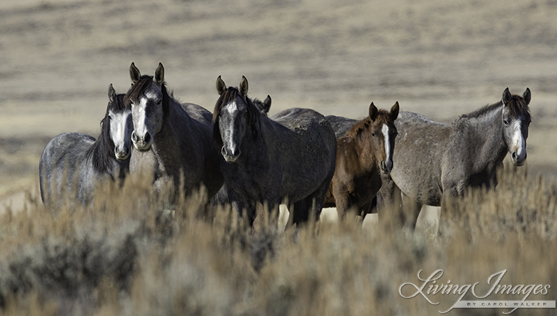 Adobe Town Mares and foal