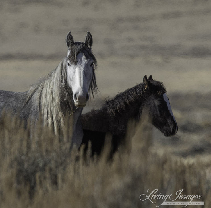 Adobe Town mare and foal - by Carol Walker