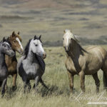 Another Big Landmark Win for Wyoming's Wild Horses! Checkerboard Ruling Overturned by Federal Appeals Court