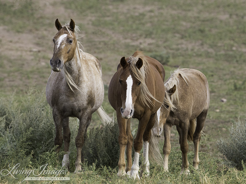 Gwendolyn, Sabrina and her filly