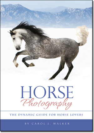 horse-photography-book-cover-300