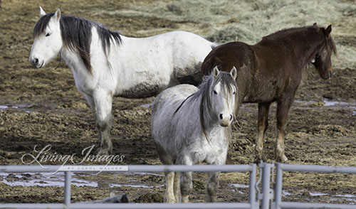 Gelding still at Rock Springs after the 2014 Checkerboard Roundup