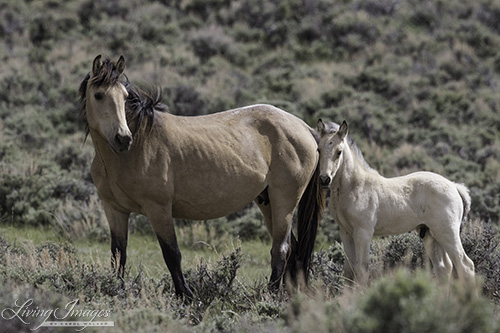 Adobe Town mare and foal