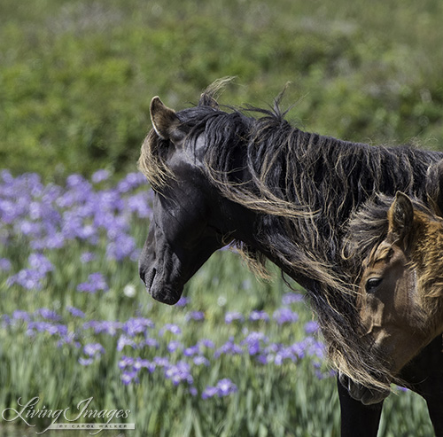 Mare and yearling