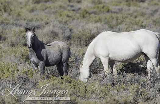 His mare and foal