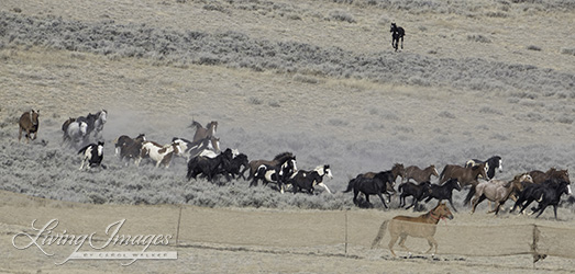 Notice the foal in the upper right corner, away from his mother
