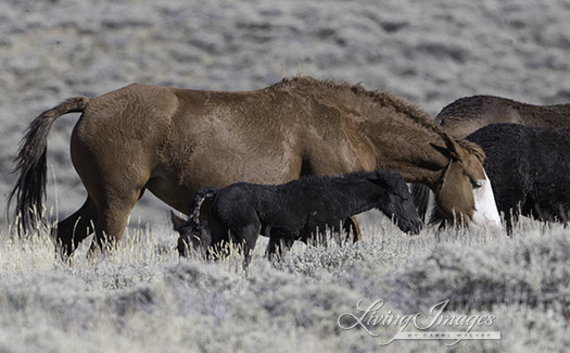Mare and little foal walk together