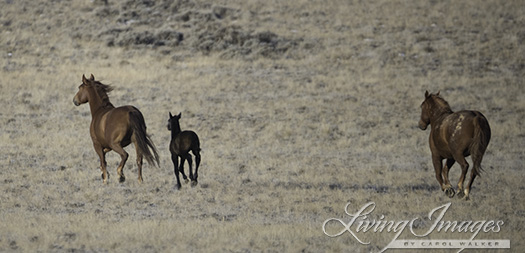 And a very little foal
