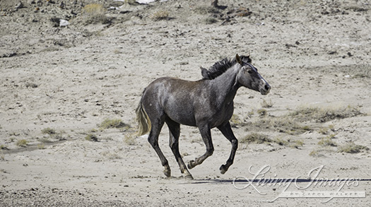 The yearling filly