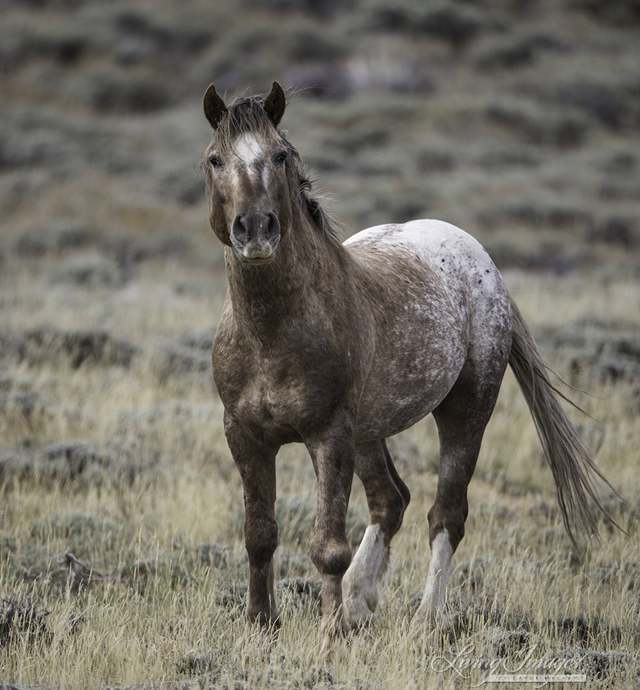 Wild Horses: A New Beginning for Older Wild Horses from ...